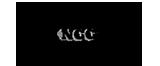 NCC TRANSFER DI ANGELI DANILO